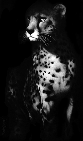 Spotted Shadow - Charcoal Drawing of a Cheetah